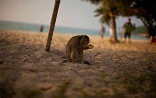 Что можно и нельзя ввозить и вывозить из таиланд в 2020 году — список запретных предметов, таможенные правила таиланда