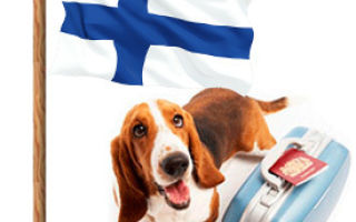 Правила ввоза животных (собак, кошек) и других товаров (алкоголя, сигарет) в финлядию в 2020 году