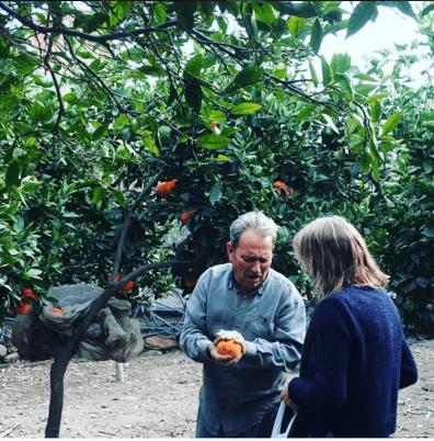 Сбор апельсинов в Испании: работа и зарплата для русских в 2020 году