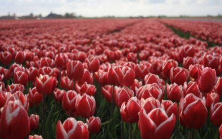 Работа в Голландии: особенности трудоустройства и доступные вакансии в 2020 году