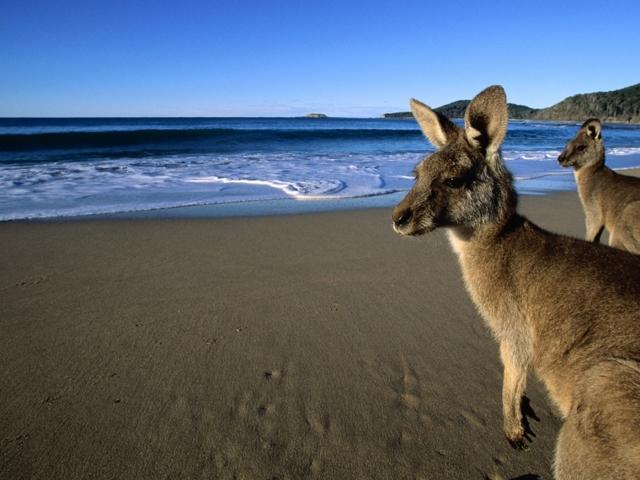 Стажировки в Австралии в 2020 году: процедура подачи заявки и оформление визы