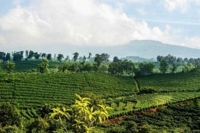 Кофе из Вьетнама лювак, кули и далат: цена в 2020 году, где покупать, как разлечить