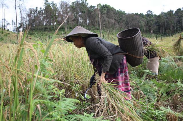 Работа в Индонезии для русских в 2020 году: вакансии, трудоустройство, зарплата